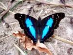 Sin Título - Mariposa